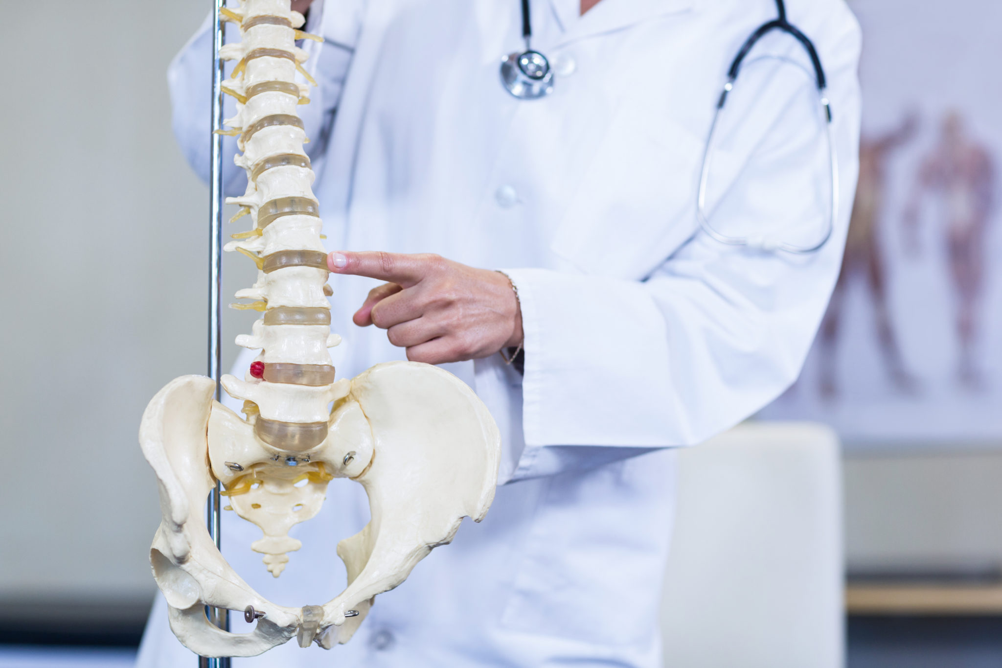 Physiotherapist examining a spine model in clinic